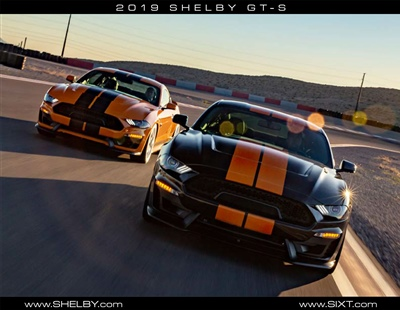 2019 Shelby GT-S